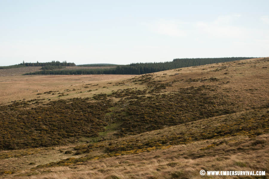 Dartmoor in September