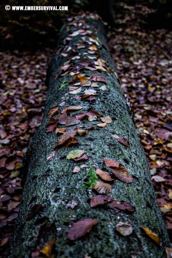Autumn_2015_3