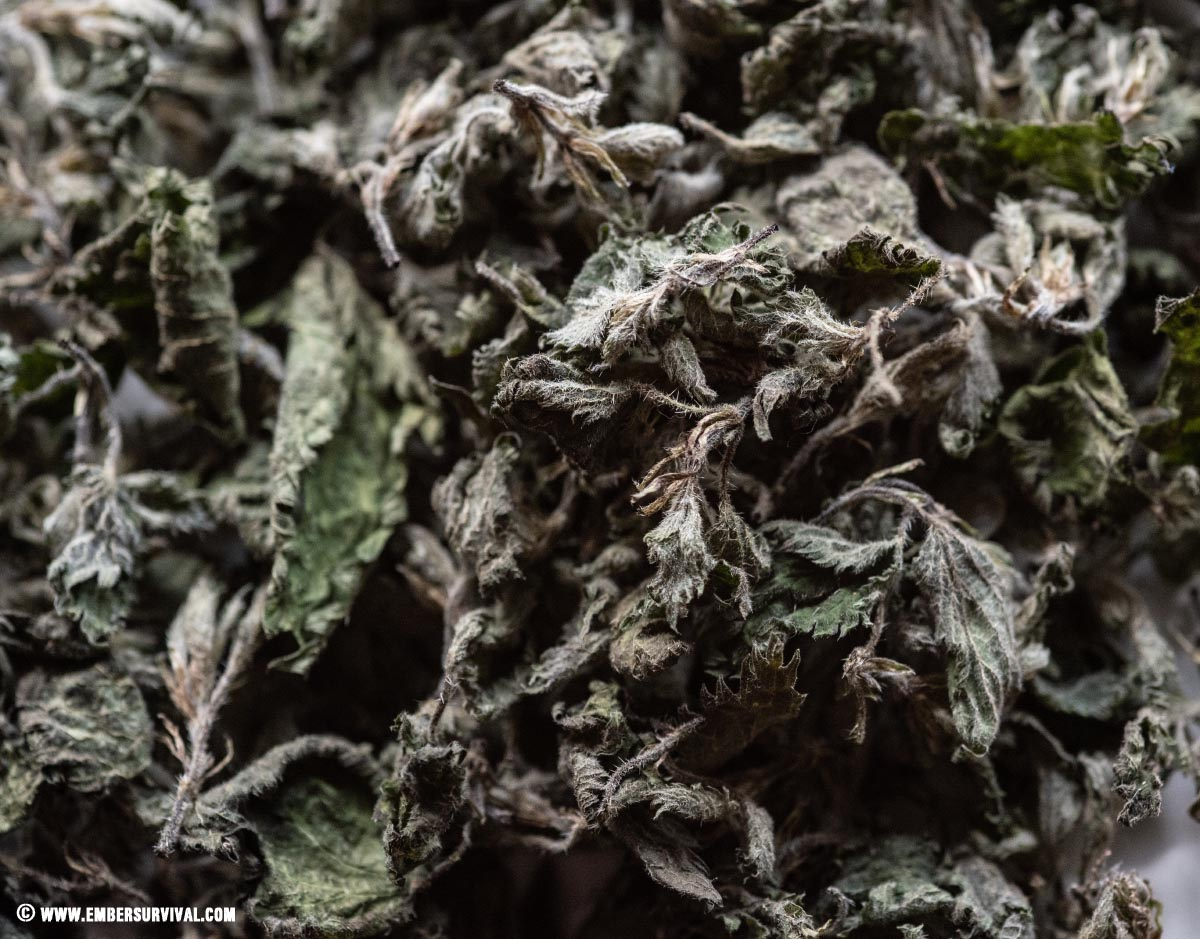 dried nettles